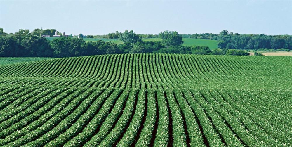 guantes protección agricultura